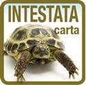 Immagine per la categoria Stampa CARTA INTESTATA
